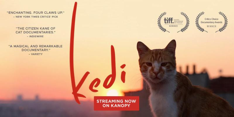 Kedi documentary poster