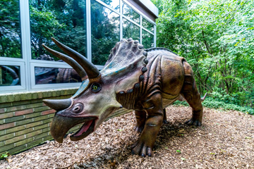Photograph of a triceratops at Cranbrook Institute of Science.