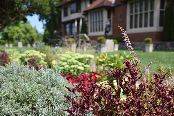 Photograph of the Library Garden at Cranbrook House & Gardens.