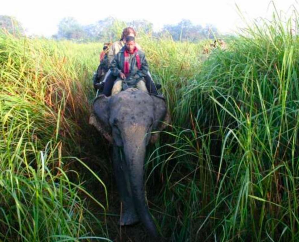 SWA ElephantGrass