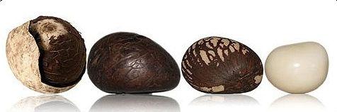 OTJ 4 Tagua Nuts