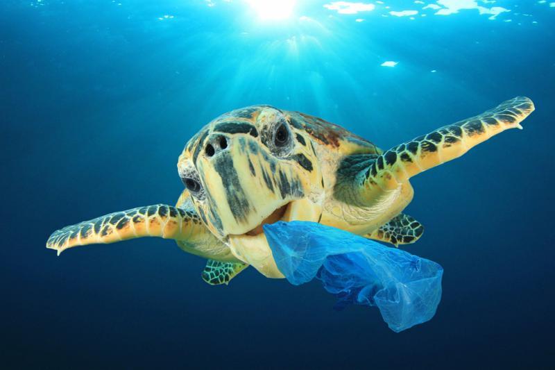 Plastic pollution problem - Sea Turtle eating plastic bag polluting ocean