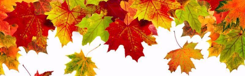 header_autumn_leaves.jpg