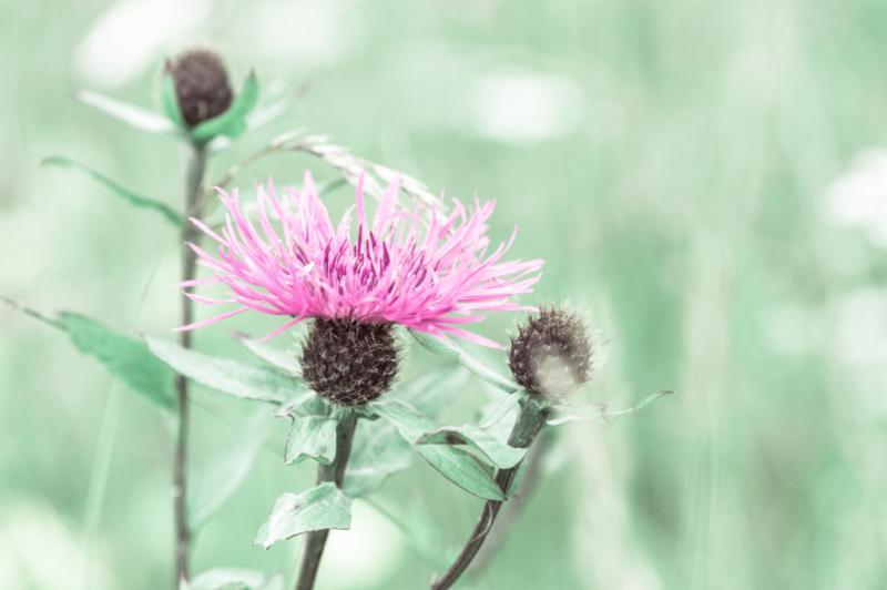 summer_meadow_flower.jpg