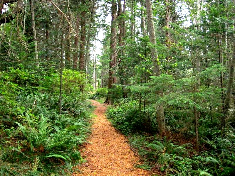 Path in old growth