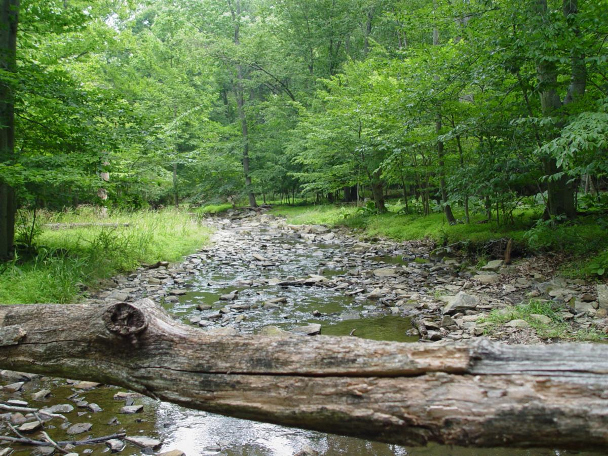 Awoodland creek in summer.