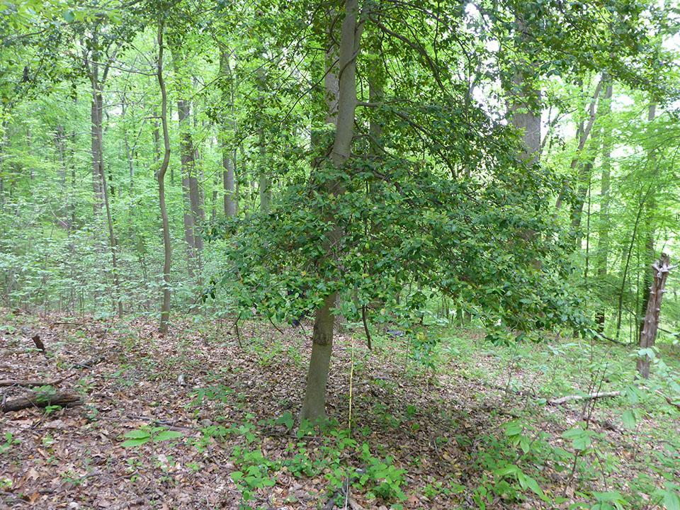 A forest vegetation plot in 2016