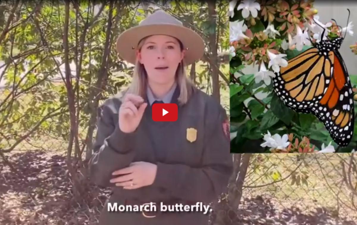 Park Ranger uses ASL to describe monarch butterflies