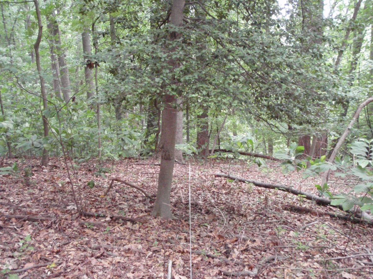 Forest vegetation plot in 2012