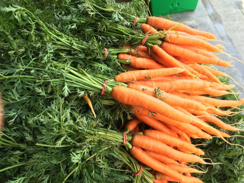 Bunched Orange Carrots