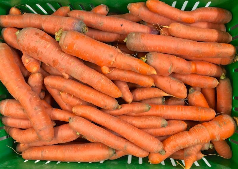 Loose Orange Carrots