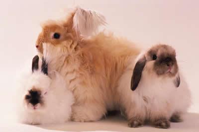 fluffy-bunnies.jpg