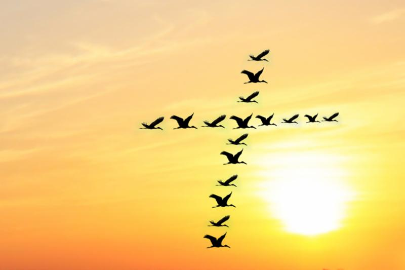 birds_cross_in_sunset.jpg