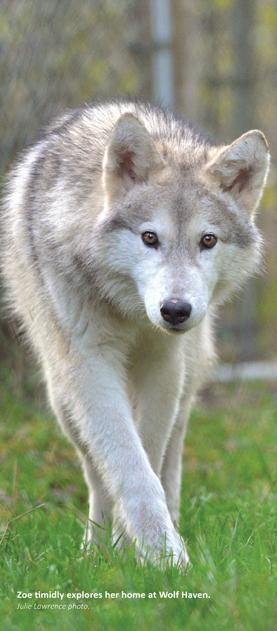Zoe at Wolf Haven today