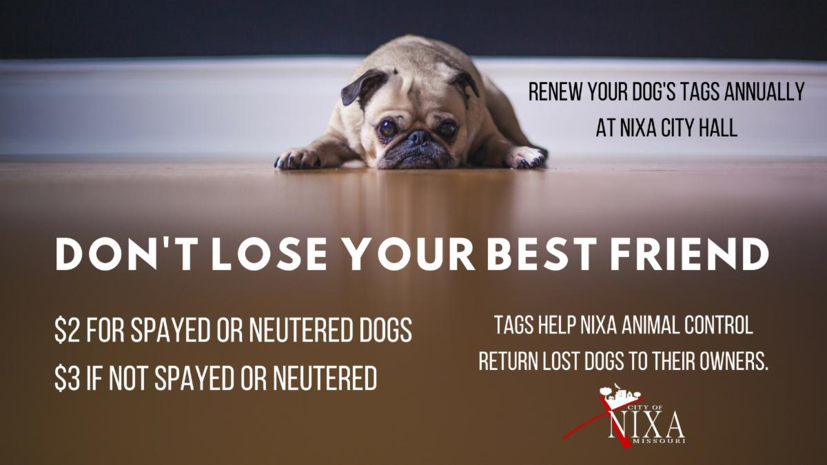 Don't lose your best friend renew your dog tags