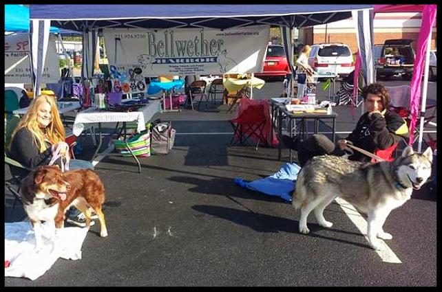 Bellwether Harbor is at Pet Pawlozza in Grand Haven today until 4pm. Come on out and meet Riley Joe and Elvira!