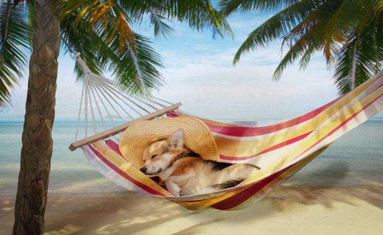 dog sleeping in hammock