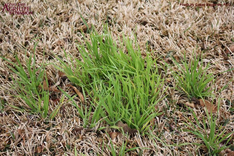 TLC: Texas Lawn Companion