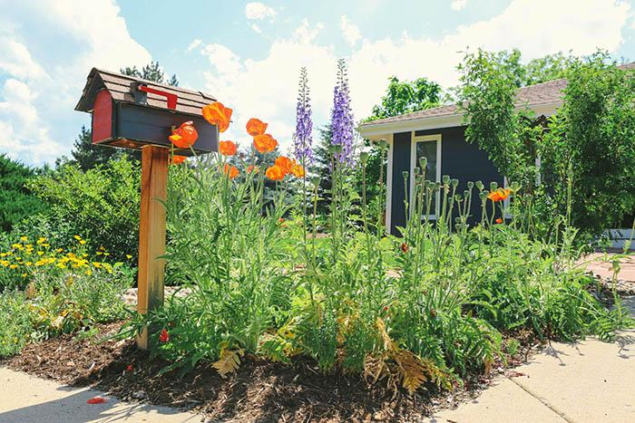 Xeriscaping your home