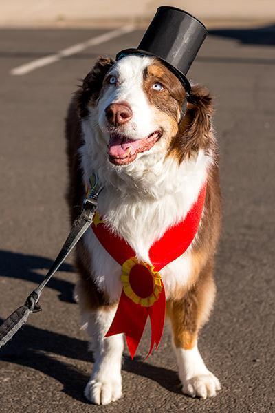 Toby Grand Marshal Pet Parade