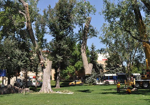 Parfet Park big tree removal