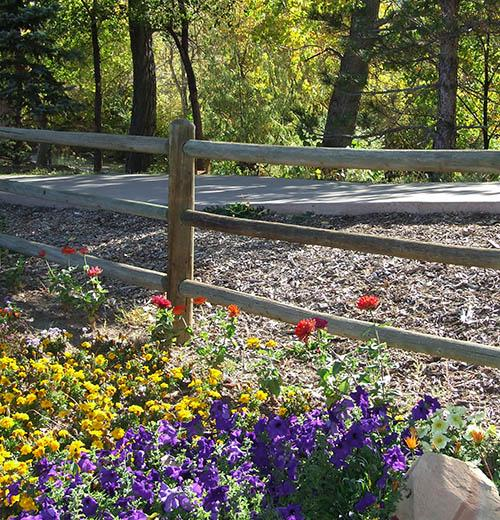 Spring flowers by Clear Creek Trail