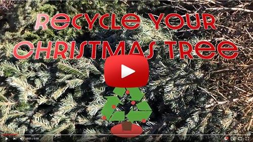 Recycle your Christmas tree video