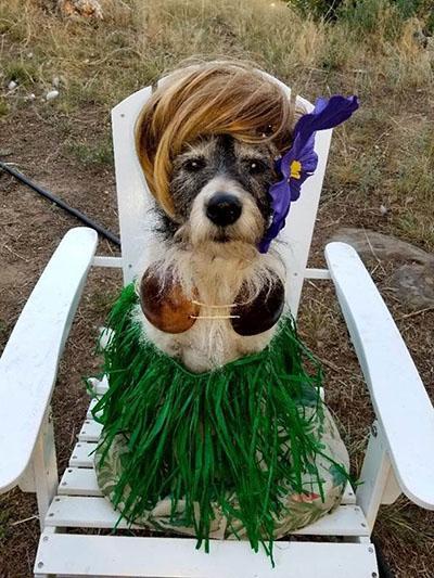 Pet Parade Grand Marshall