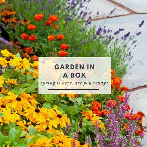 Garden in a Box flowers