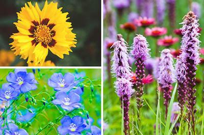 Xeric Flowers