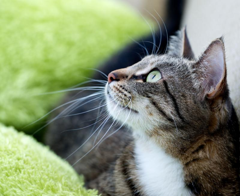 cat_portrait_closeup.jpg
