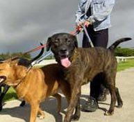dog-walker2.jpg