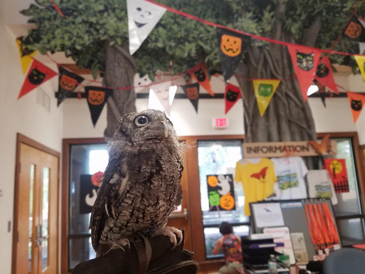 Owl with hoot and howl event in background