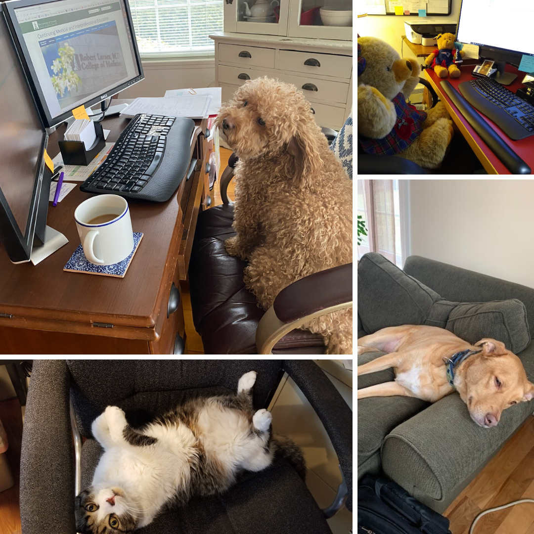 Pets and furry friends provide support for working remotely.
