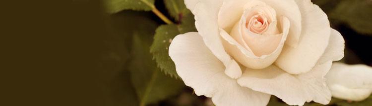 white-flower-banner.jpg