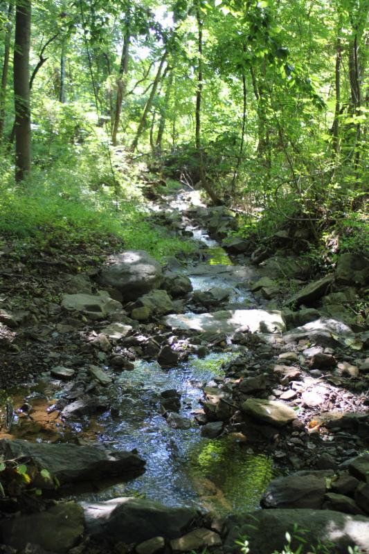 Rock Brook Tributary at Spring Hill Rd.