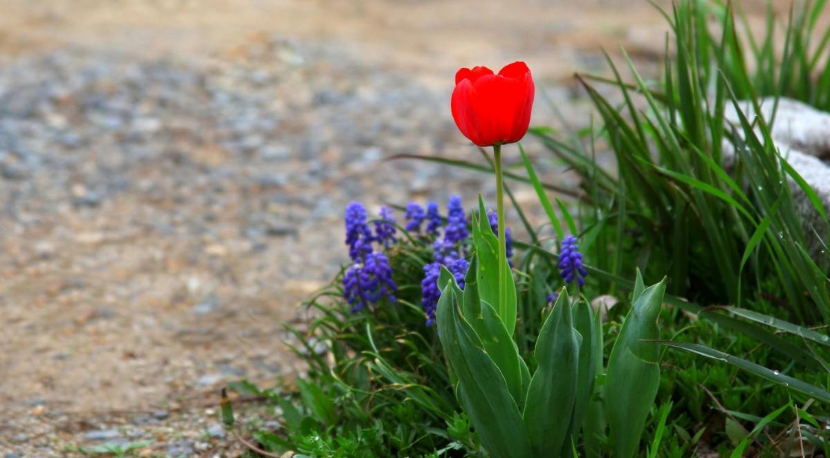 Flowers on pathway