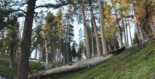 Peavine Research Natural Area