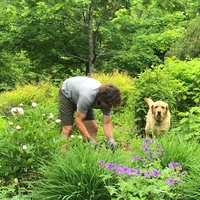 A gardener and their dog tend flowers and shrubbery