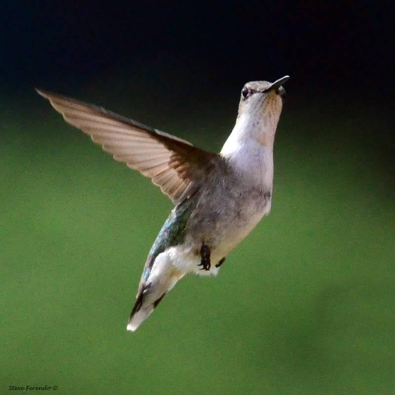 Steve Feraro Natural World through my Camera blog