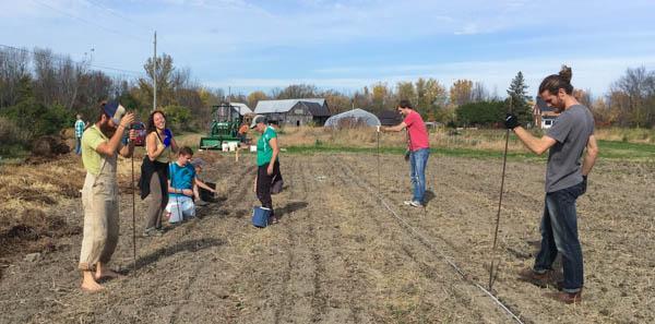 Workers at BeetBox planting garlic