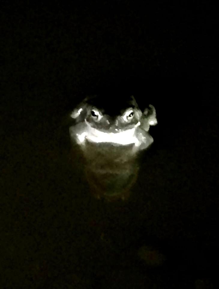 sue toad