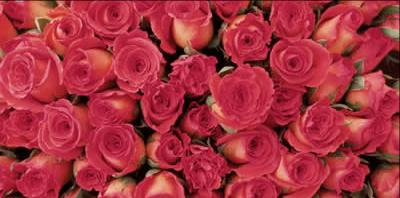 rose-bouquet.jpg