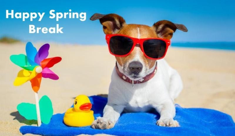 Happy spring break. Dog on the beach wearing sunglasses