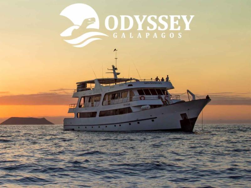 384175db d235 4355 8f96 017330b6d986 - Birdwatching Galapagos Cruises