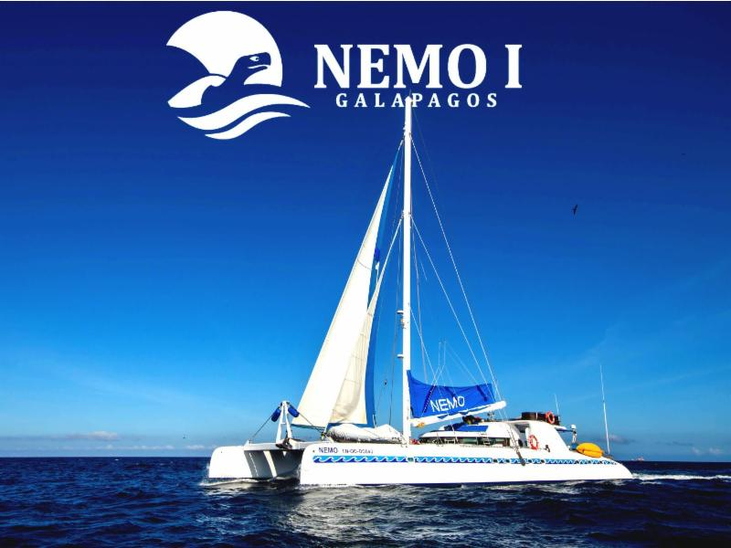5f238de1 5cb9 437e a3ab 5406b63f384f - Birdwatching Galapagos Cruises