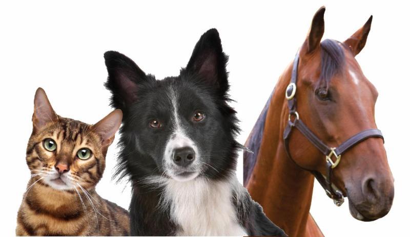 horsedogcat.jpg