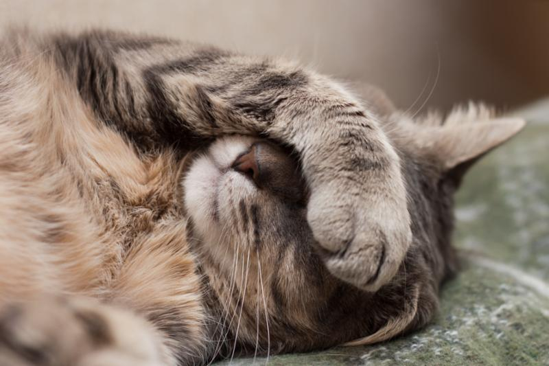 sleeping_cat.jpg