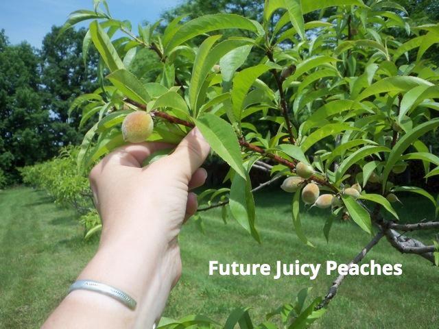 peaches baby