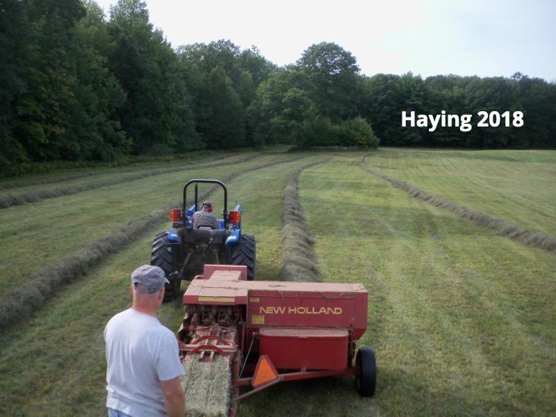 haying 2018